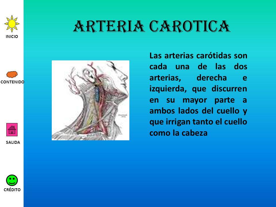 Arteria carotica Las arterias carótidas son cada una de las dos arterias, derecha e izquierda, que discurren en su mayor parte a ambos lados del cuell
