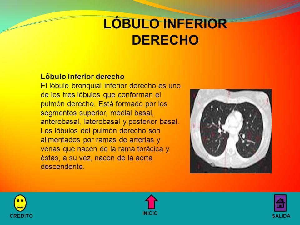 Lóbulo inferior derecho El lóbulo bronquial inferior derecho es uno de los tres lóbulos que conforman el pulmón derecho.