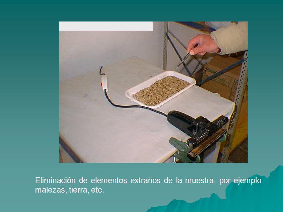 Eliminación de elementos extraños de la muestra, por ejemplo malezas, tierra, etc.