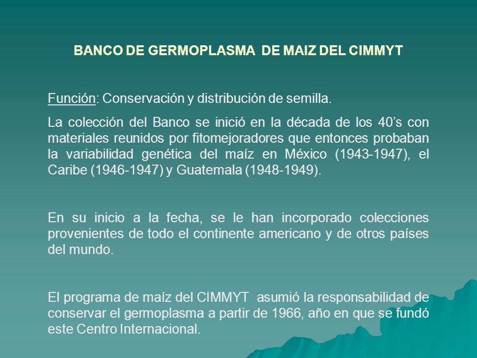 BANCO DE GERMOPLASMA DE MAIZ DEL CIMMYT Función: Conservación y distribución de semilla. La colección del Banco se inició en la década de los 40s con