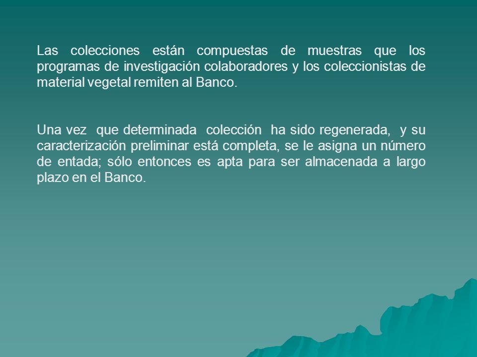 Las colecciones están compuestas de muestras que los programas de investigación colaboradores y los coleccionistas de material vegetal remiten al Banc
