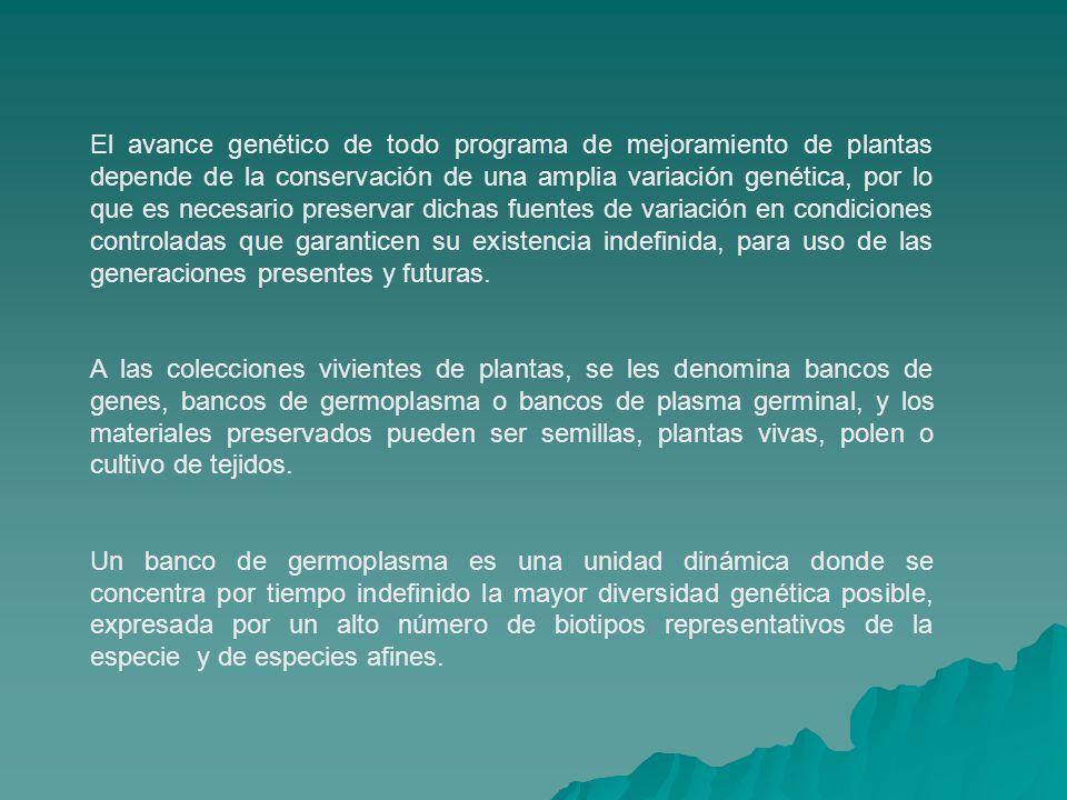 El avance genético de todo programa de mejoramiento de plantas depende de la conservación de una amplia variación genética, por lo que es necesario pr