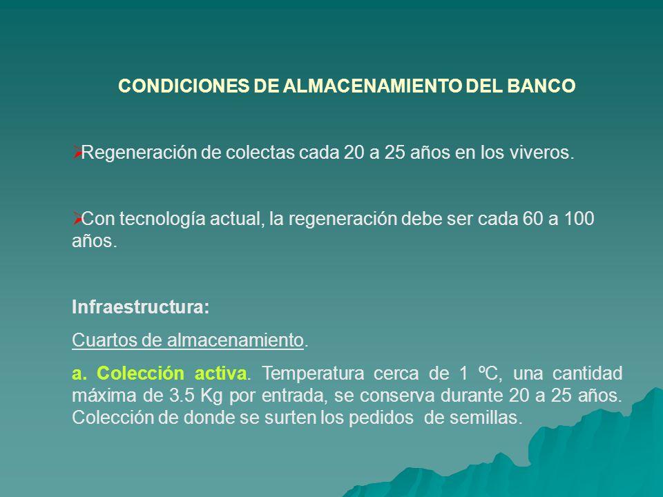 CONDICIONES DE ALMACENAMIENTO DEL BANCO Regeneración de colectas cada 20 a 25 años en los viveros. Con tecnología actual, la regeneración debe ser cad
