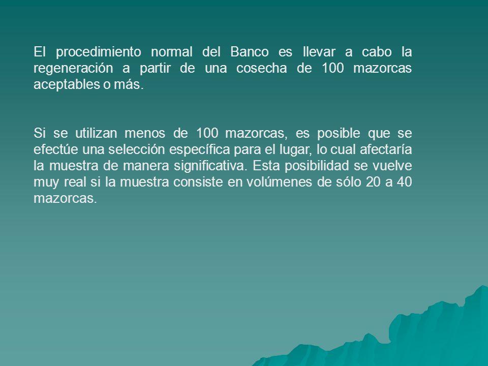El procedimiento normal del Banco es llevar a cabo la regeneración a partir de una cosecha de 100 mazorcas aceptables o más. Si se utilizan menos de 1
