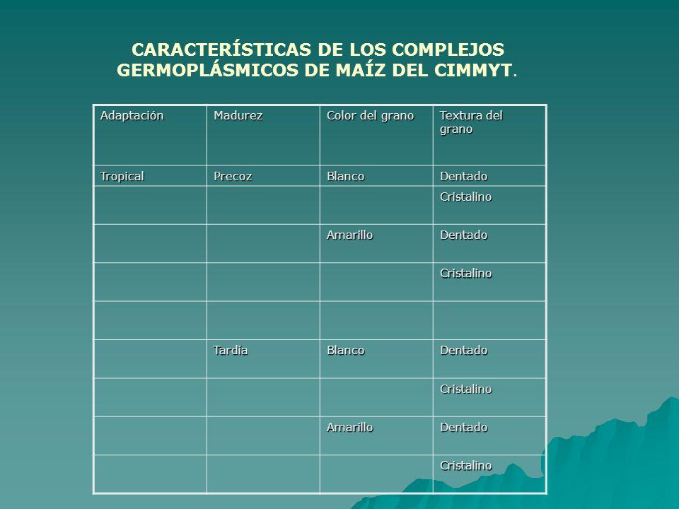 CARACTERÍSTICAS DE LOS COMPLEJOS GERMOPLÁSMICOS DE MAÍZ DEL CIMMYT. AdaptaciónMadurez Color del grano Textura del grano TropicalPrecozBlancoDentado Cr