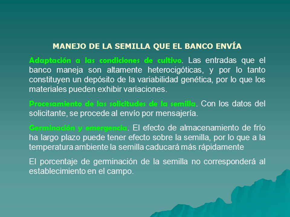MANEJO DE LA SEMILLA QUE EL BANCO ENVÍA Adaptación a las condiciones de cultivo. Las entradas que el banco maneja son altamente heterocigóticas, y por