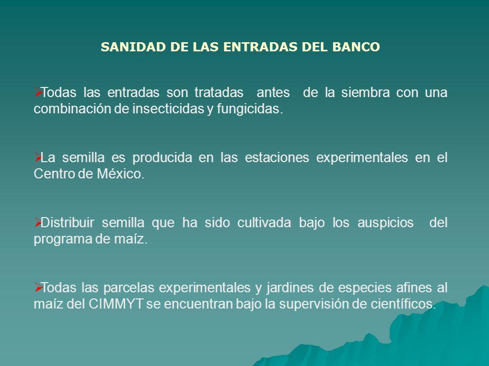SANIDAD DE LAS ENTRADAS DEL BANCO Todas las entradas son tratadas antes de la siembra con una combinación de insecticidas y fungicidas. La semilla es