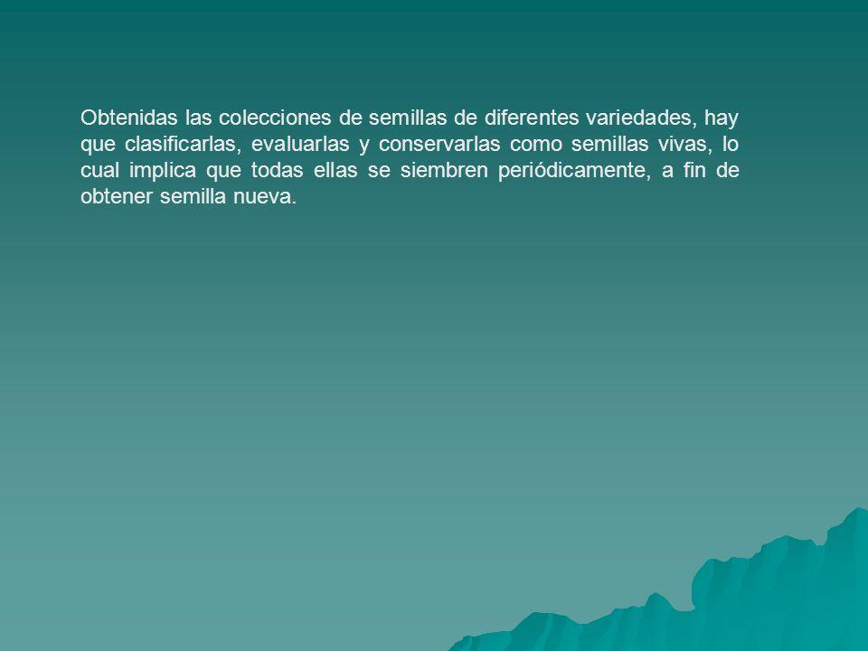 TIPOS DE MATERIALES DEL BANCO 1.Razas locales.