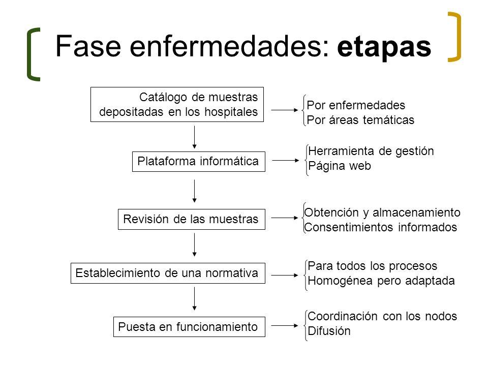 Fase enfermedades: etapas Catálogo de muestras depositadas en los hospitales Revisión de las muestras Establecimiento de una normativa Puesta en funci