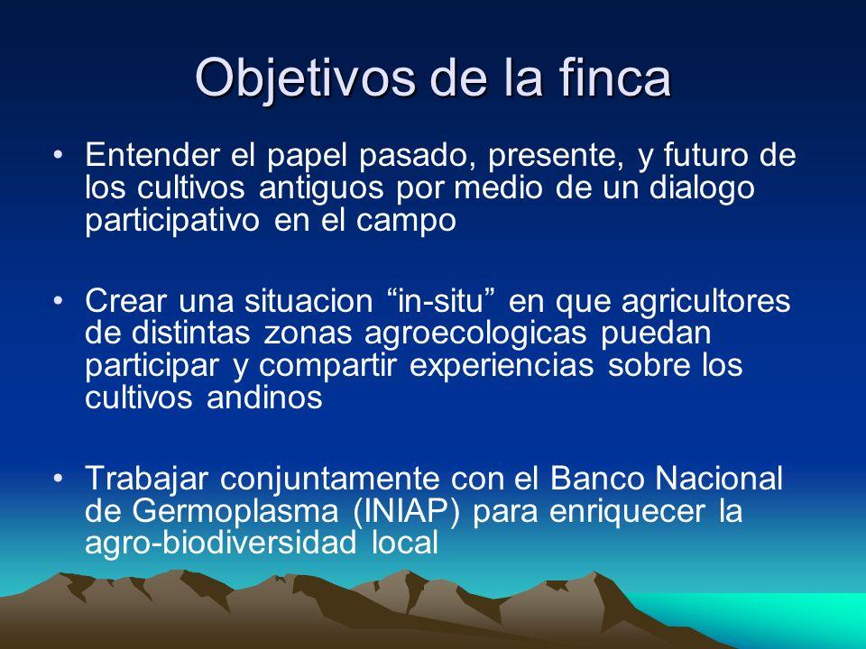 Objetivos de la finca Entender el papel pasado, presente, y futuro de los cultivos antiguos por medio de un dialogo participativo en el campo Crear un
