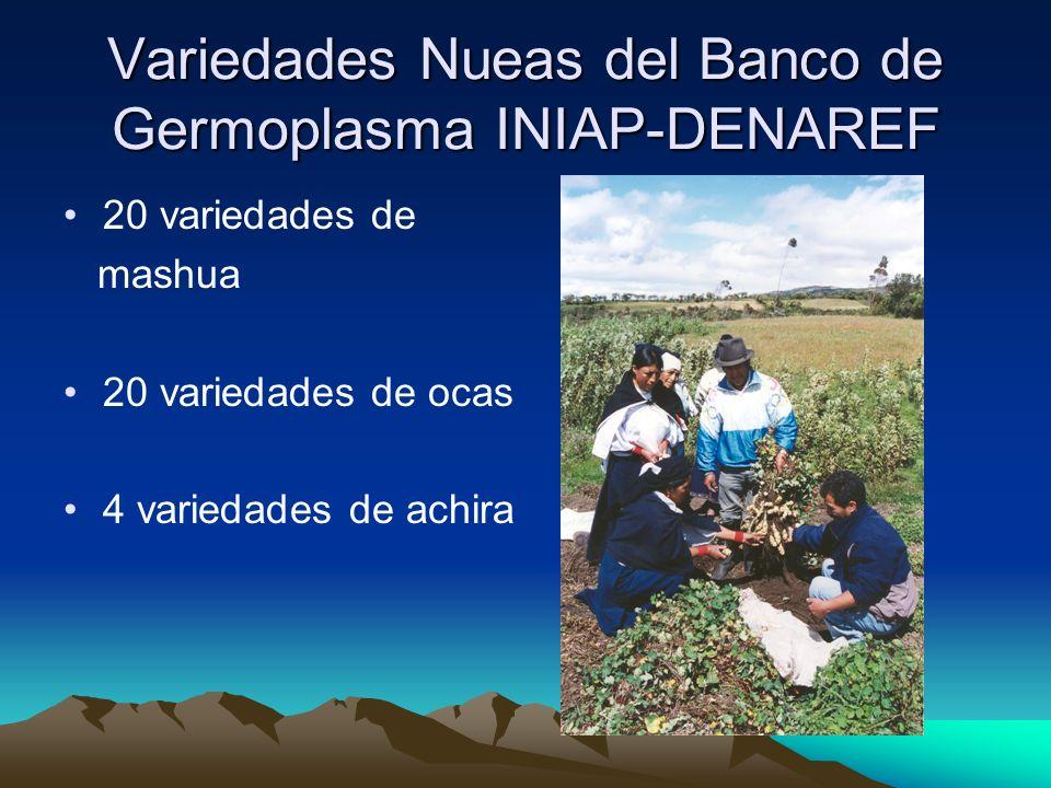 Variedades Nueas del Banco de Germoplasma INIAP-DENAREF 20 variedades de mashua 20 variedades de ocas 4 variedades de achira