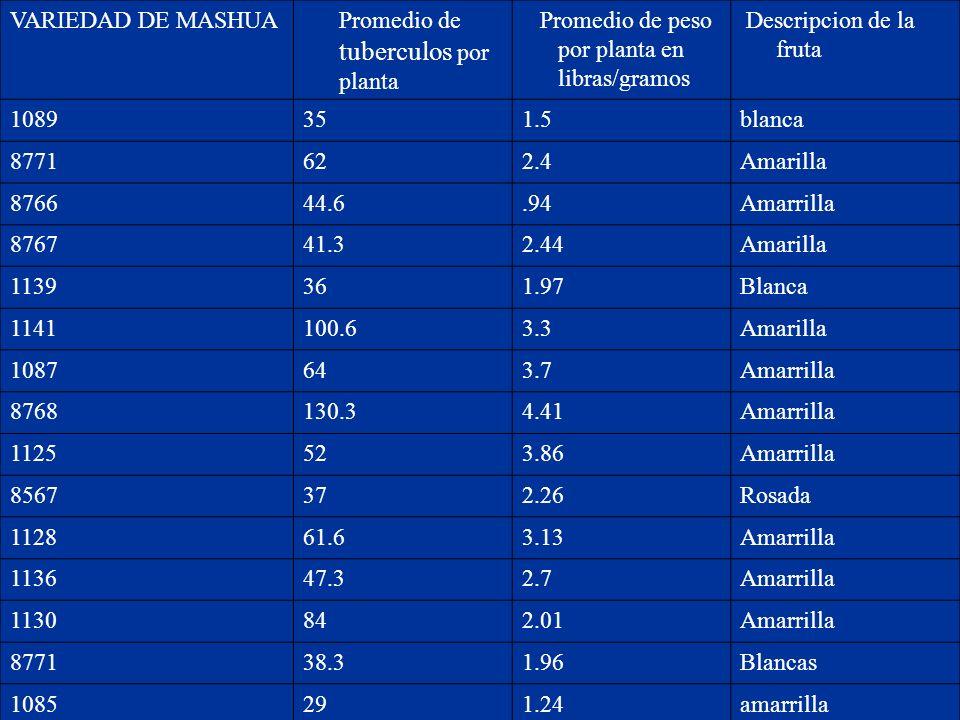 VARIEDAD DE MASHUA Promedio de tuberculos por planta Promedio de peso por planta en libras/gramos Descripcion de la fruta 1089351.5blanca 8771622.4Ama