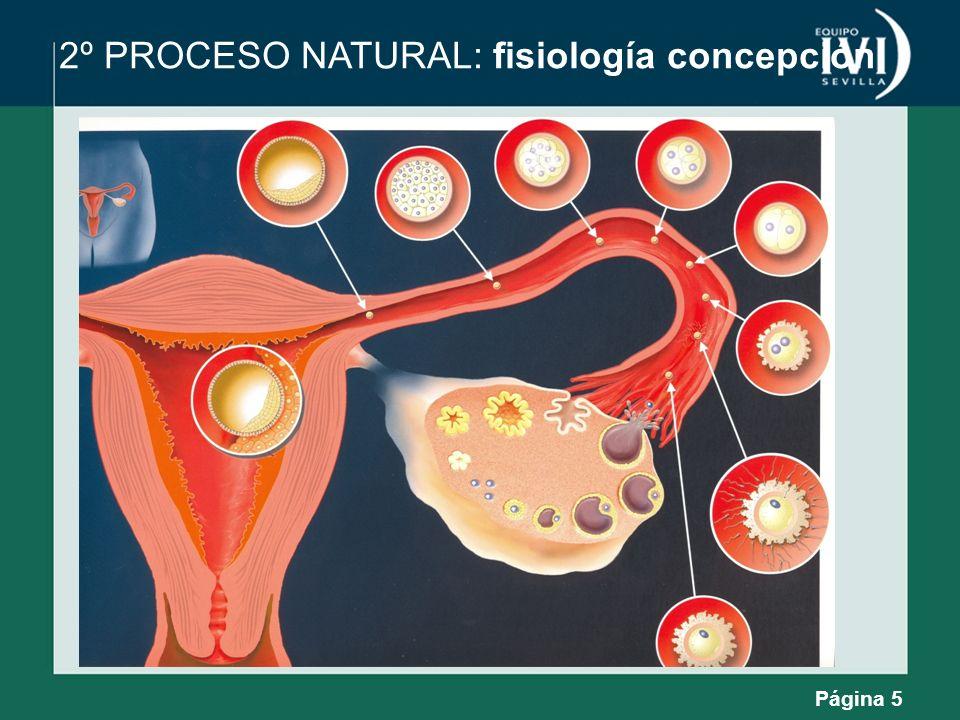 Página 5 2º PROCESO NATURAL: fisiología concepción