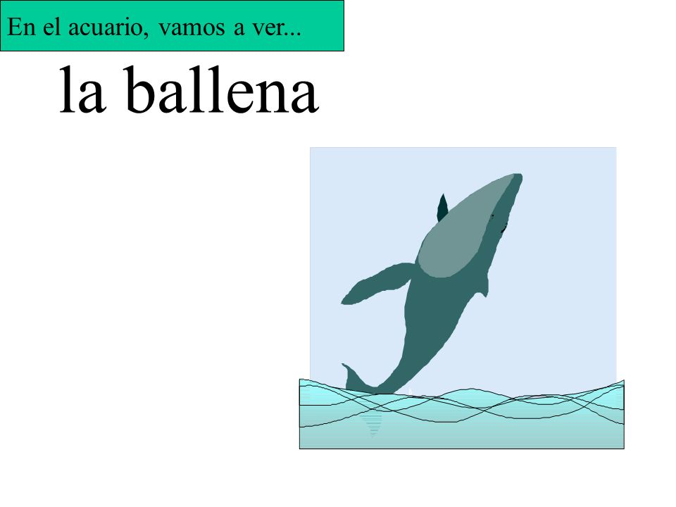 Say the name of the sea creature in Spanish to make it appear.