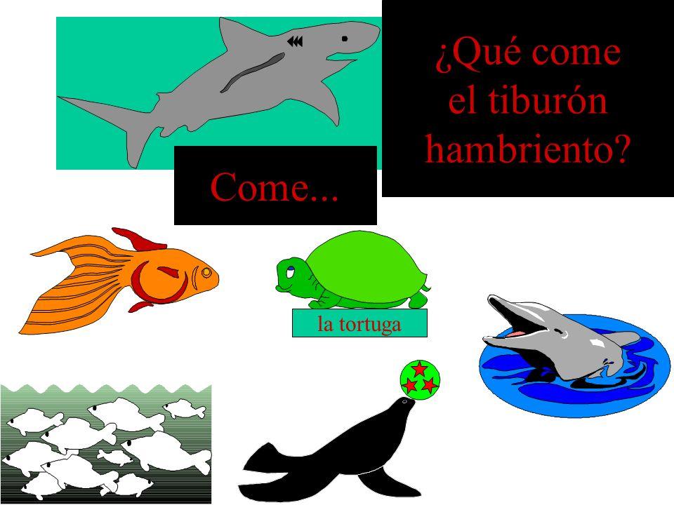 ¿Qué come el tiburón hambriento? la foca Come...