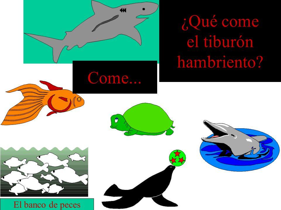 ¿Qué come el tiburón hambriento? la tortuga Come...