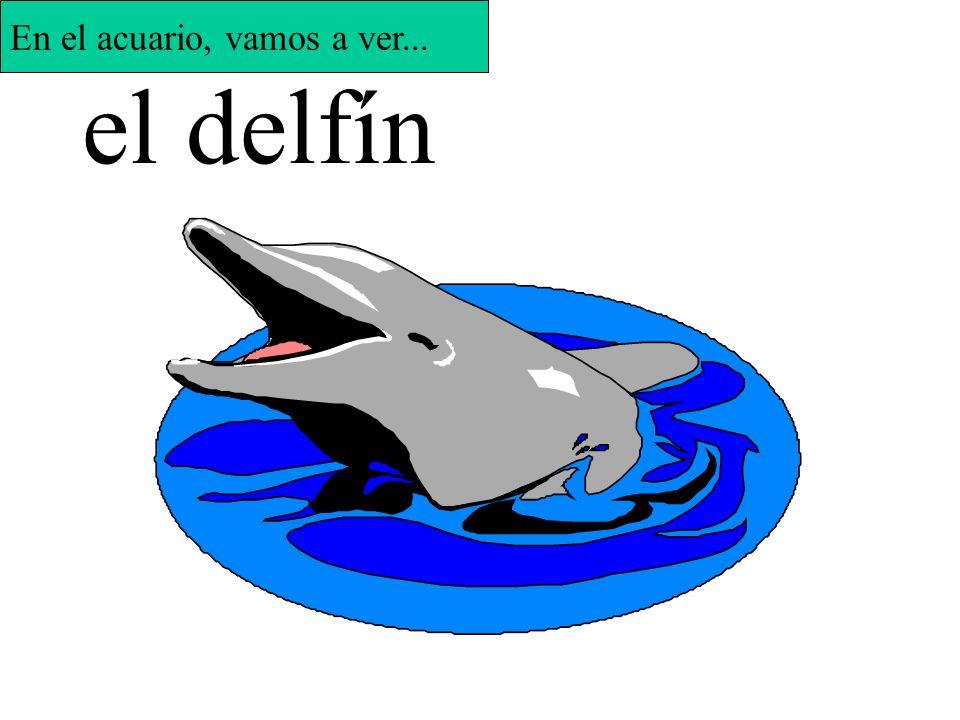 la ballena En el acuario, vamos a ver...
