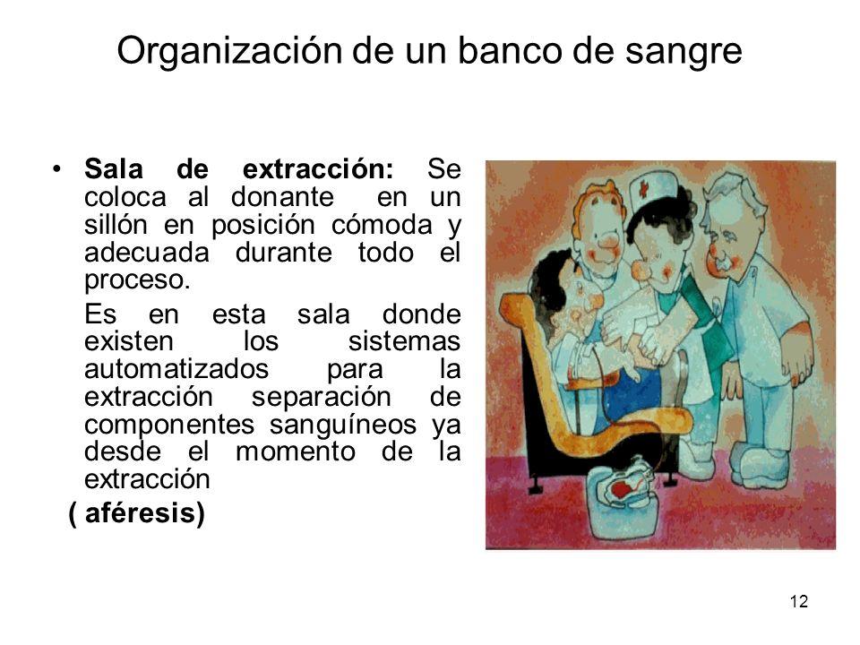 12 Organización de un banco de sangre Sala de extracción: Se coloca al donante en un sillón en posición cómoda y adecuada durante todo el proceso. Es