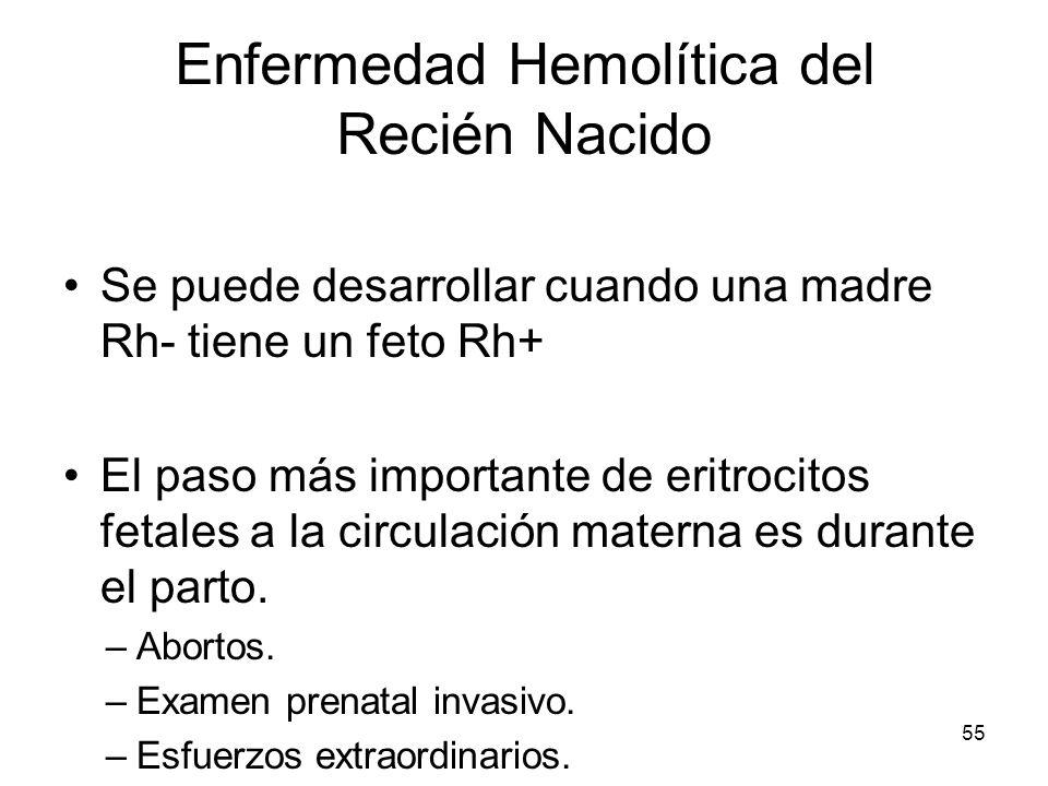 55 Enfermedad Hemolítica del Recién Nacido Se puede desarrollar cuando una madre Rh- tiene un feto Rh+ El paso más importante de eritrocitos fetales a