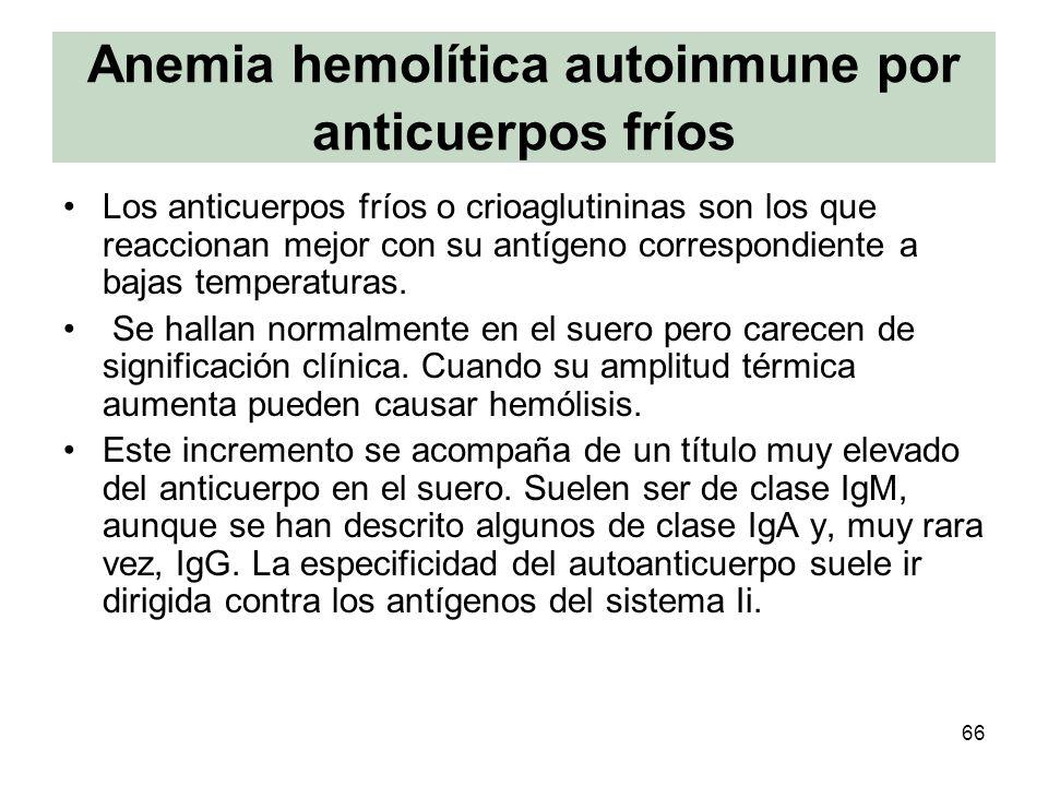 66 Anemia hemolítica autoinmune por anticuerpos fríos Los anticuerpos fríos o crioaglutininas son los que reaccionan mejor con su antígeno correspondi