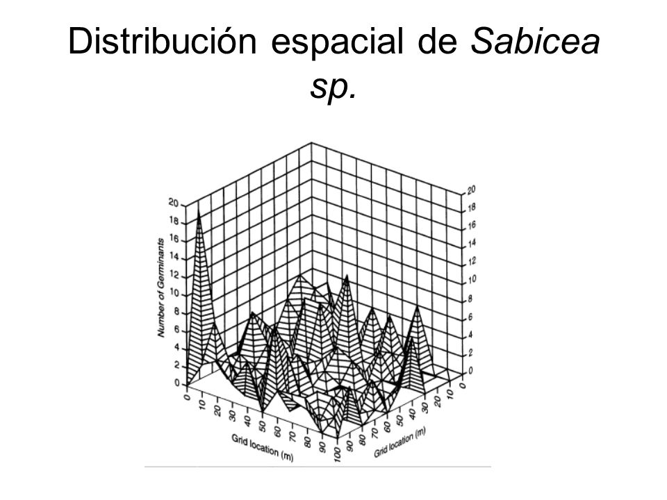 Distribución espacial de Sabicea sp.