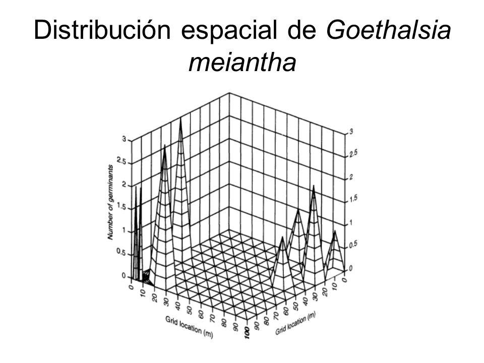 Distribución espacial de Goethalsia meiantha