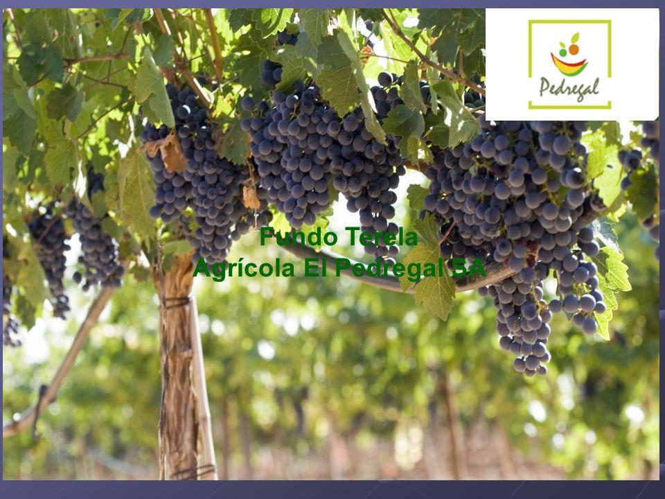 Fundo Terela Agrícola El Pedregal SA