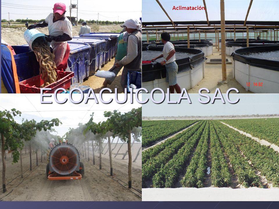 Eco-Acuícola SAC. Aclimatación. ECOACUICOLA SAC
