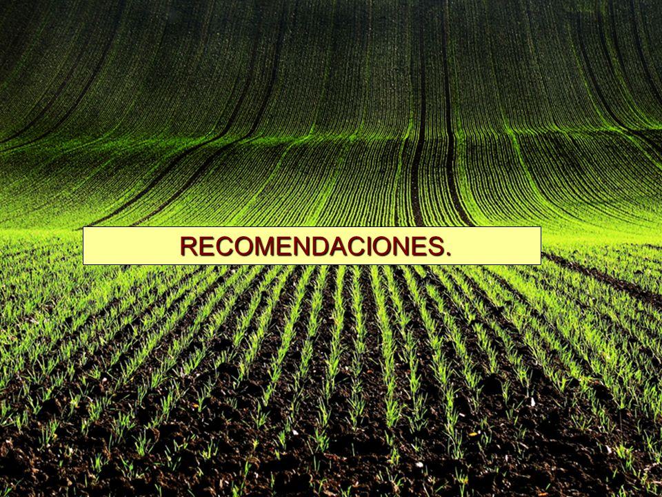 RECOMENDACIONES. RECOMENDACIONES.
