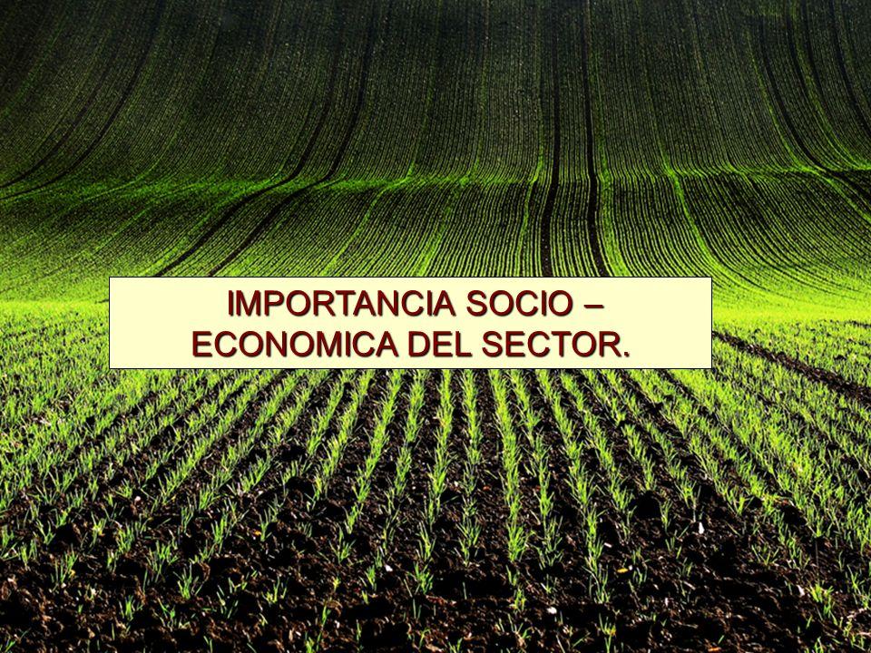 IMPORTANCIA SOCIO – ECONOMICA DEL SECTOR. IMPORTANCIA SOCIO – ECONOMICA DEL SECTOR.
