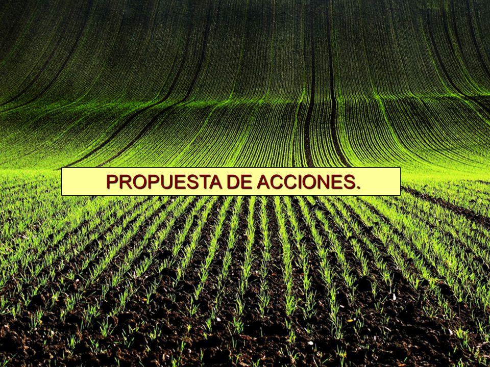 PROPUESTA DE ACCIONES. PROPUESTA DE ACCIONES.