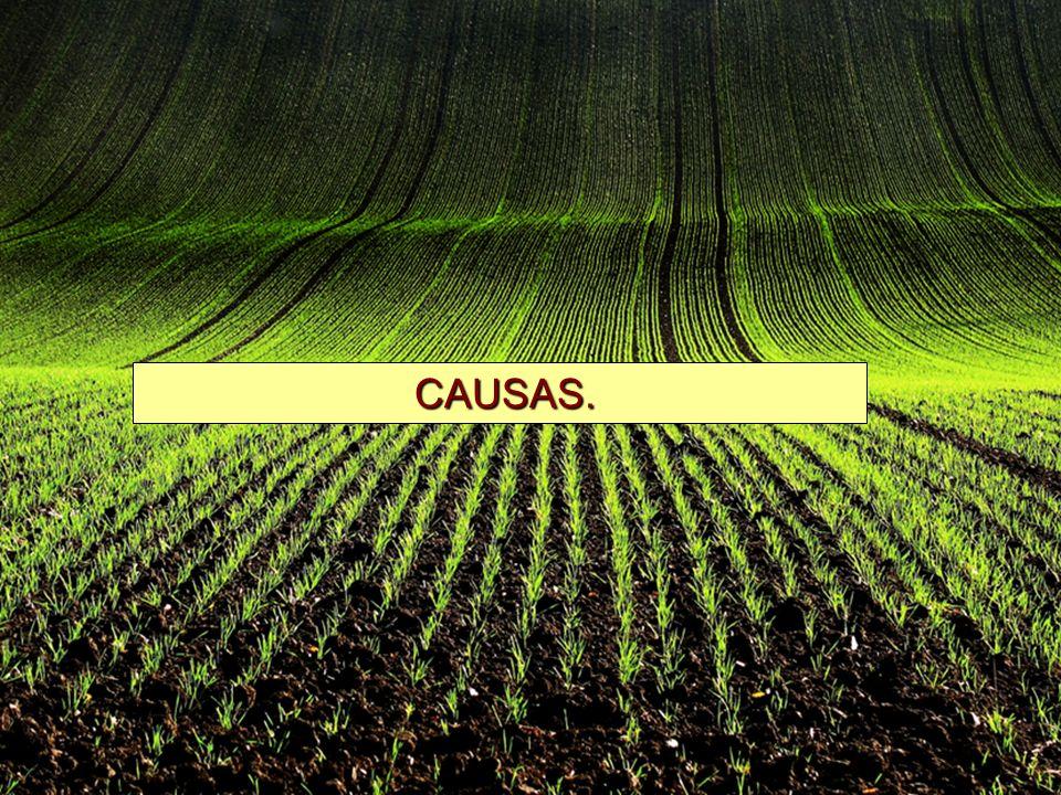 La demanda de granos ha aumentado debido al abatimiento de la pobreza en el mundo.