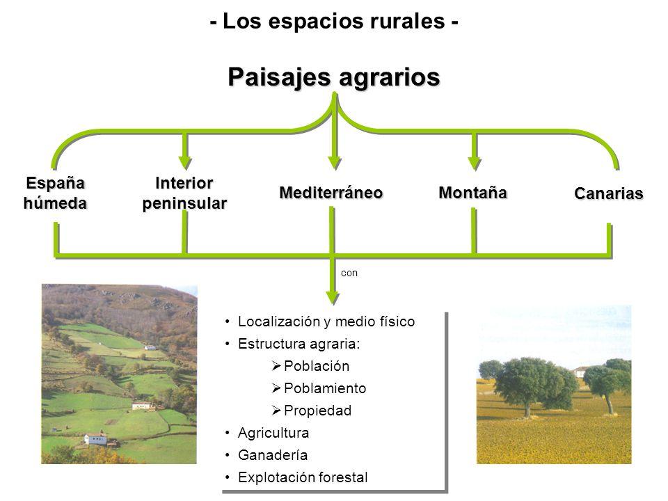 Paisajes agrarios España húmeda Interior peninsular Mediterráneo Canarias Montaña Localización y medio físico Estructura agraria: Población Poblamient