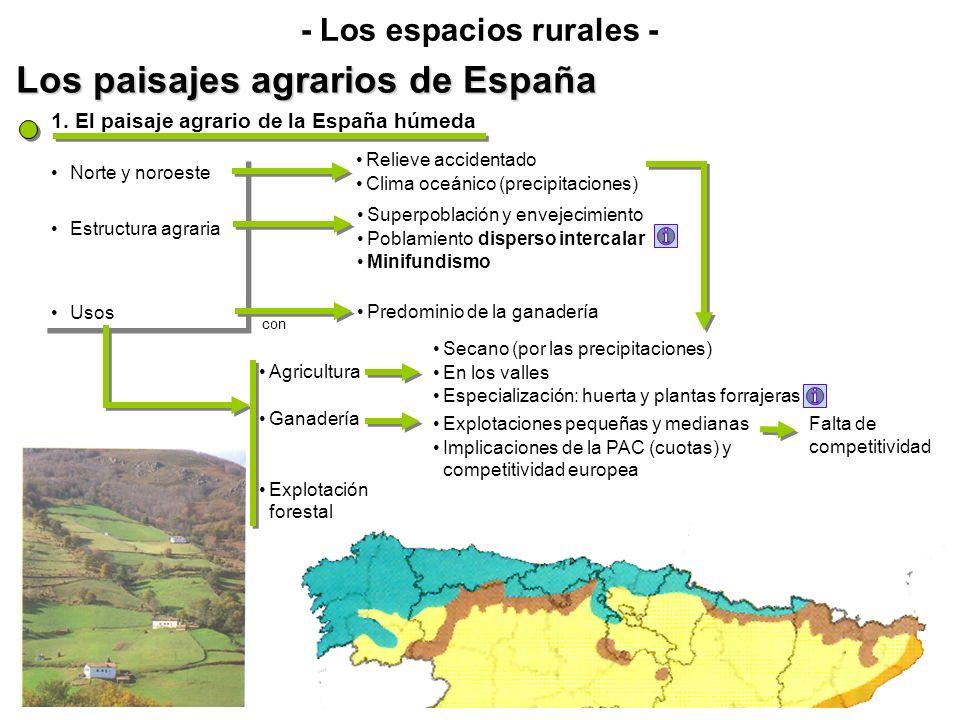 Los paisajes agrarios de España - Los espacios rurales - Norte y noroeste Estructura agraria Usos Norte y noroeste Estructura agraria Usos 1. El paisa