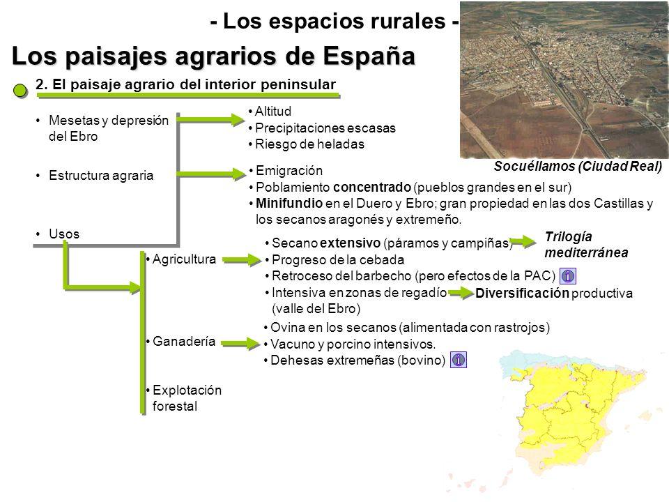 Los paisajes agrarios de España - Los espacios rurales - Mesetas y depresión del Ebro Estructura agraria Usos Mesetas y depresión del Ebro Estructura