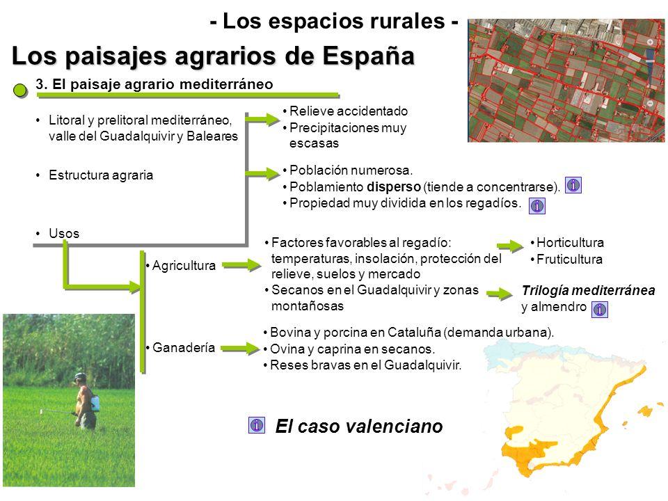 Los paisajes agrarios de España - Los espacios rurales - Litoral y prelitoral mediterráneo, valle del Guadalquivir y Baleares Estructura agraria Usos