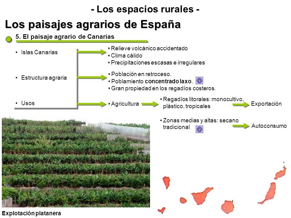 Los paisajes agrarios de España - Los espacios rurales - Islas Canarias Estructura agraria Usos Islas Canarias Estructura agraria Usos 5. El paisaje a