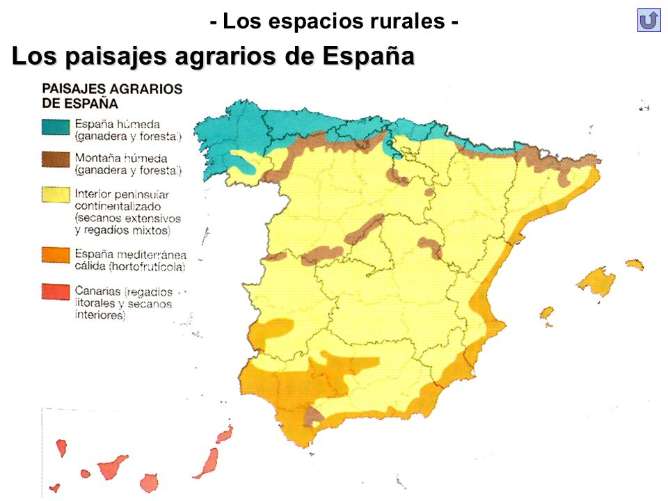 - Los espacios rurales - Los paisajes agrarios de España