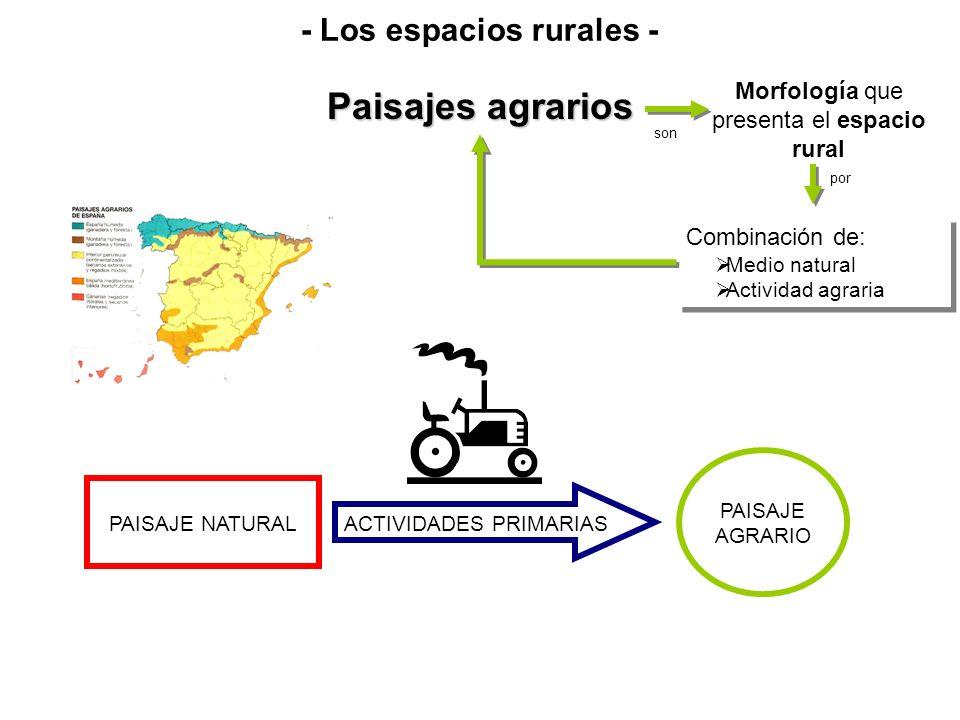 Paisajes agrarios Morfología que presenta el espacio rural son Combinación de: Medio natural Actividad agraria Combinación de: Medio natural Actividad