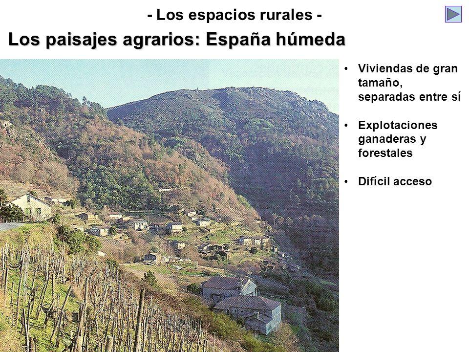 Los paisajes agrarios: España húmeda - Los espacios rurales - Viviendas de gran tamaño, separadas entre sí Explotaciones ganaderas y forestales Difíci