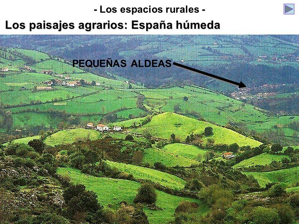 PEQUEÑAS ALDEAS Los paisajes agrarios: España húmeda - Los espacios rurales -