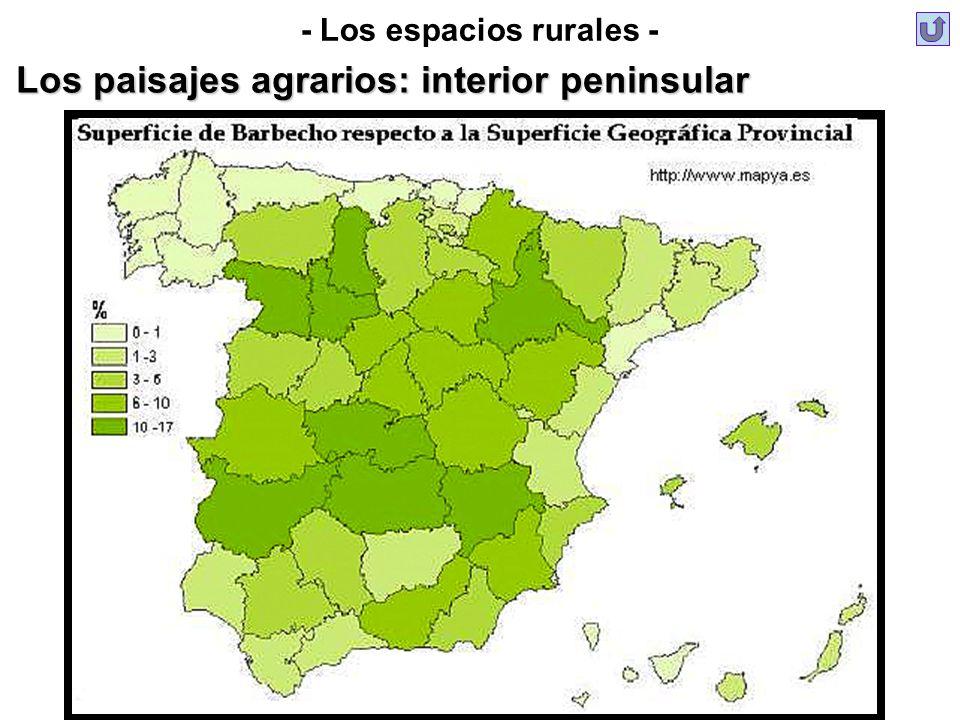 - Los espacios rurales - Los paisajes agrarios: interior peninsular