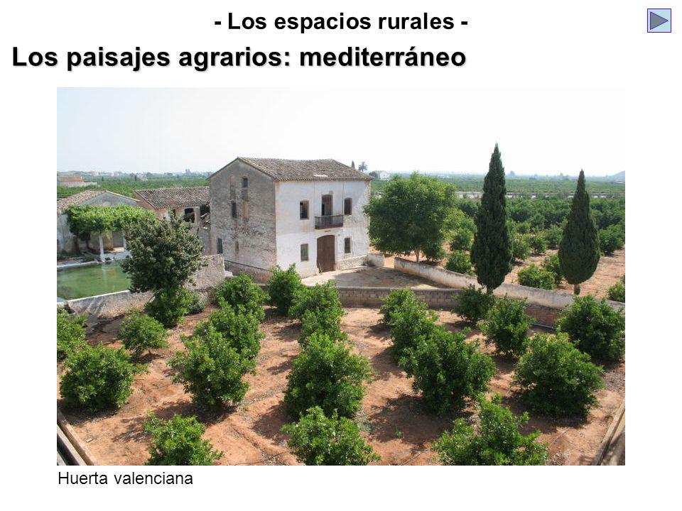- Los espacios rurales - Los paisajes agrarios: mediterráneo Huerta valenciana