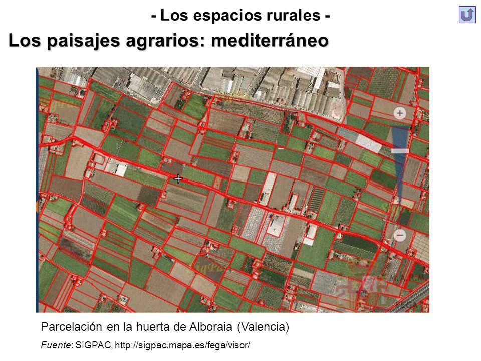 - Los espacios rurales - Los paisajes agrarios: mediterráneo Parcelación en la huerta de Alboraia (Valencia) Fuente: SIGPAC, http://sigpac.mapa.es/feg