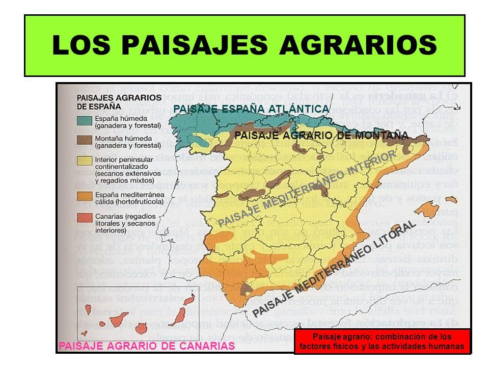 PAISAJE ESPAÑA ATLÁNTICA PAISAJE MEDITERRÁNEO INTERIOR PAISAJE MEDITERRÁNEO LITORAL PAISAJE AGRARIO DE MONTAÑA PAISAJE AGRARIO DE CANARIAS Paisaje agr