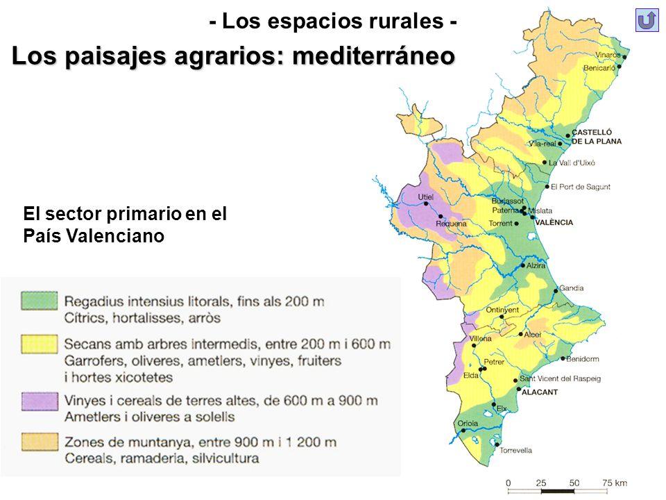 - Los espacios rurales - Los paisajes agrarios: mediterráneo El sector primario en el País Valenciano