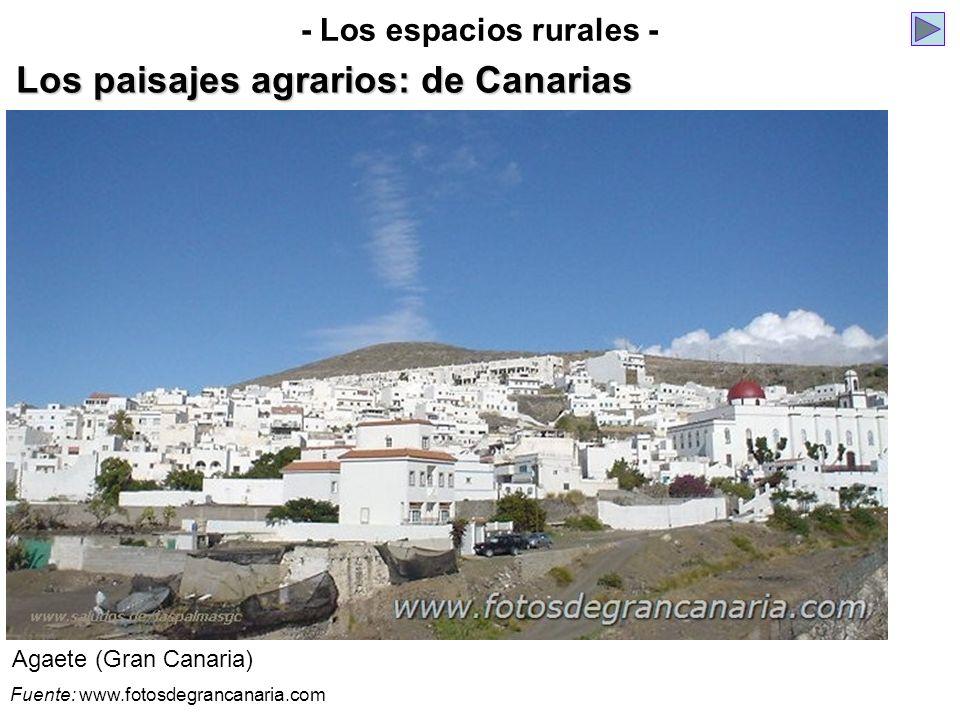 Agaete (Gran Canaria) - Los espacios rurales - Los paisajes agrarios: de Canarias Fuente: www.fotosdegrancanaria.com