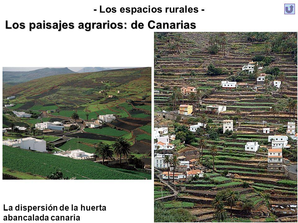 La dispersión de la huerta abancalada canaria - Los espacios rurales - Los paisajes agrarios: de Canarias