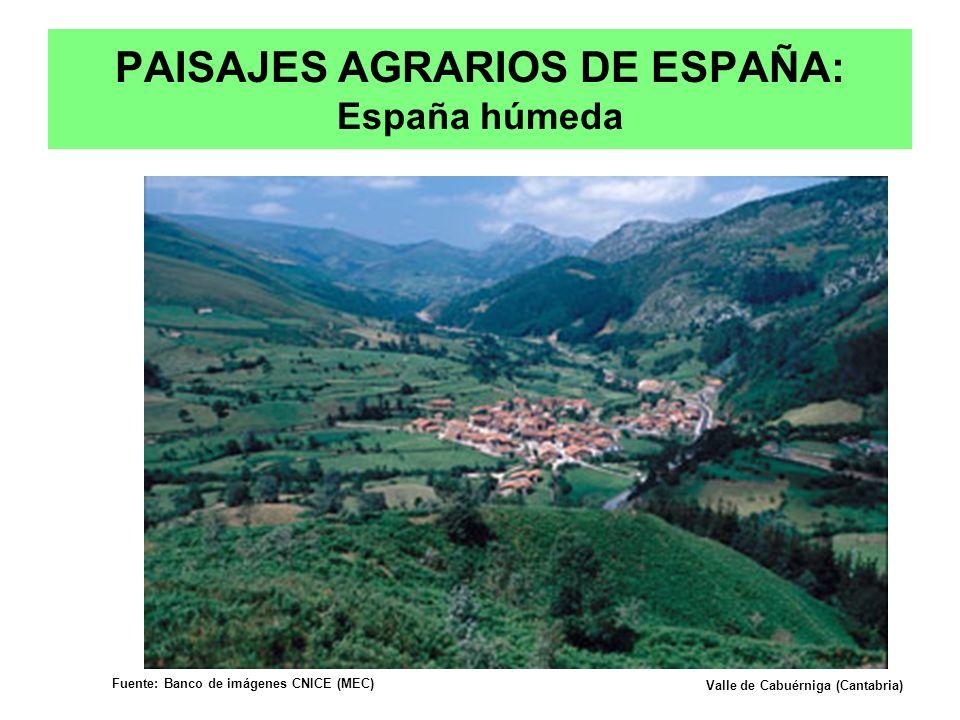 PAISAJES AGRARIOS DE ESPAÑA: España húmeda Valle de Cabuérniga (Cantabria) Fuente: Banco de imágenes CNICE (MEC) Prof. Isaac Buzo Sánchez