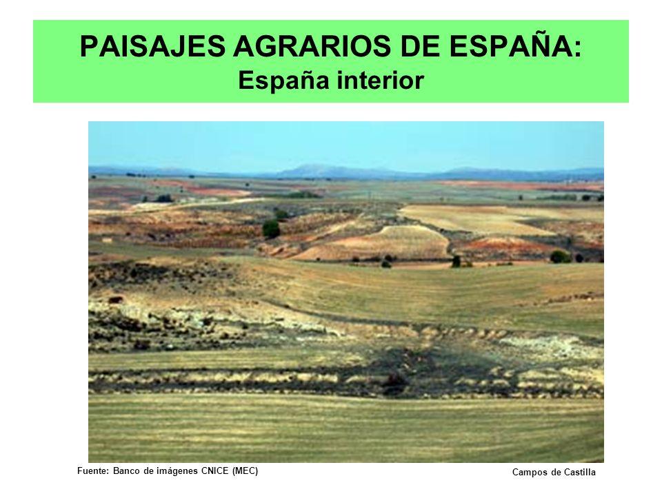 PAISAJES AGRARIOS DE ESPAÑA: España interior Campos de Castilla Fuente: Banco de imágenes CNICE (MEC) Prof. Isaac Buzo Sánchez